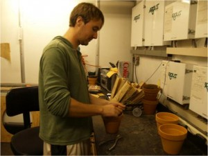 BA/MA student Tim Horgan-Kobelski harvests P. cespitosum plants grown under elevated CO2